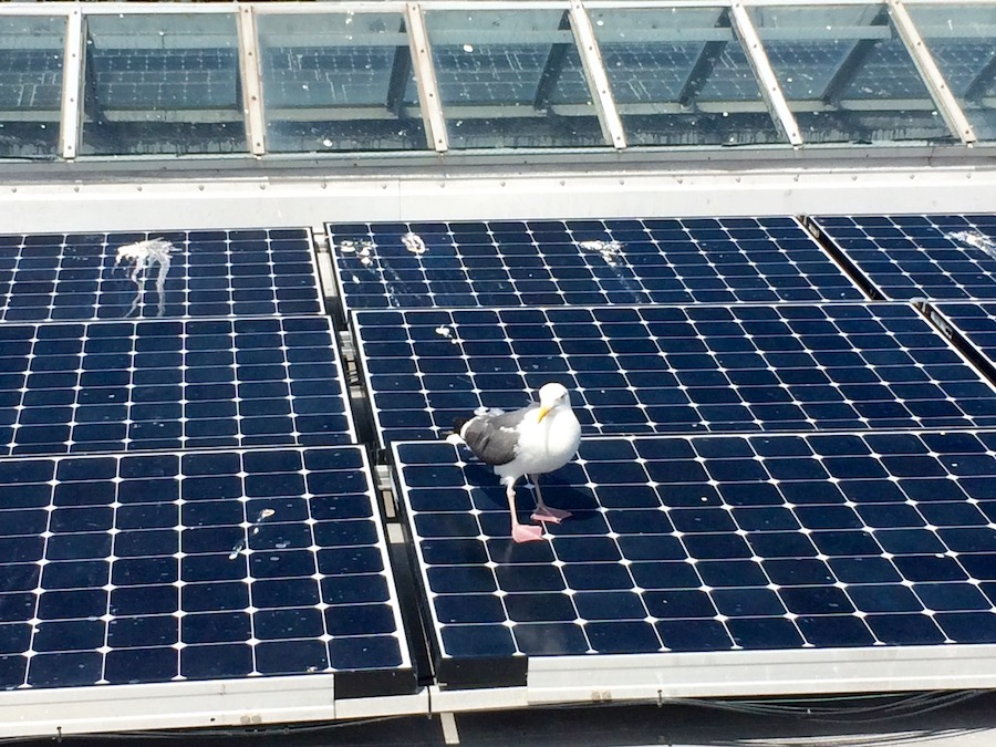 Commercial Services - Solar Panel Cleaning and Bird Deterrent in Southern California